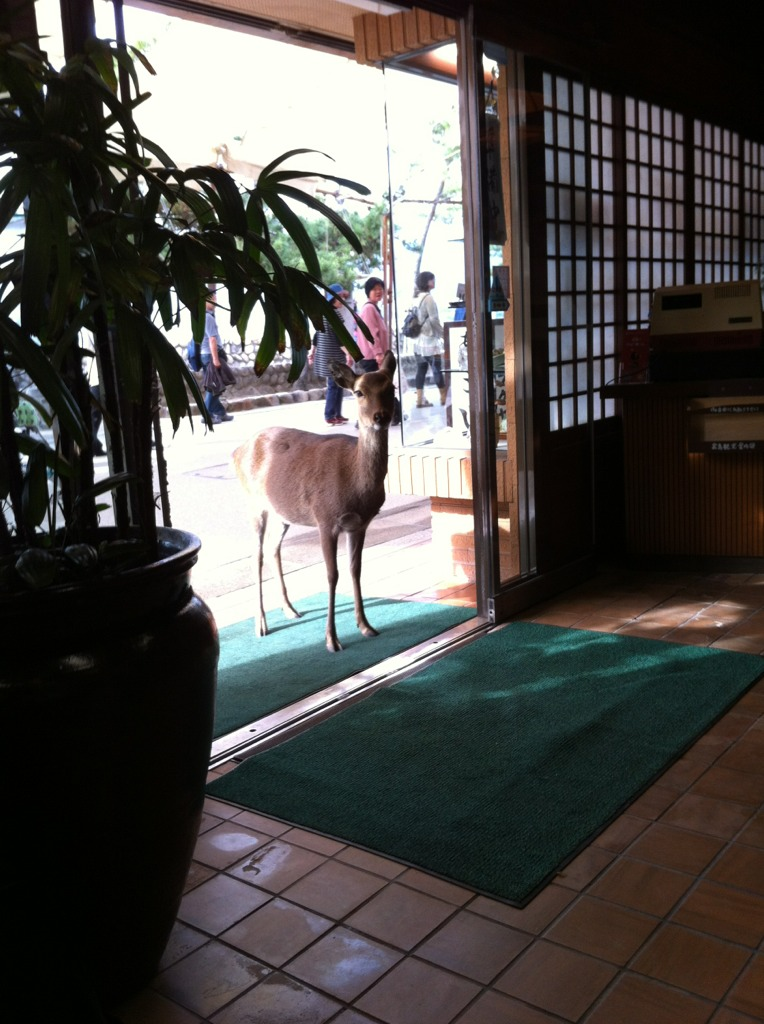 So this deer walked into a restaurant and said...