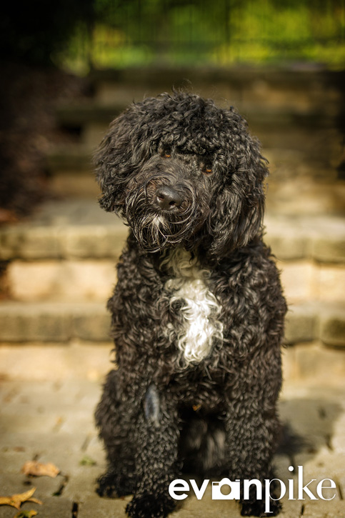 Cary Pet Portrait 02