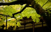 https://www.evanpike.com/new_site/wp-content/uploads/2012/03/Japan-Photo-Guide-357.jpg